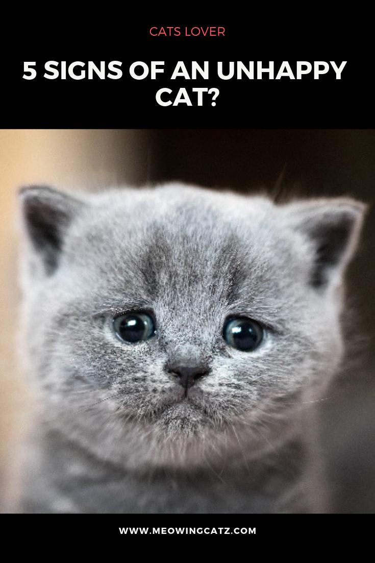 Pin On Cat Hacks