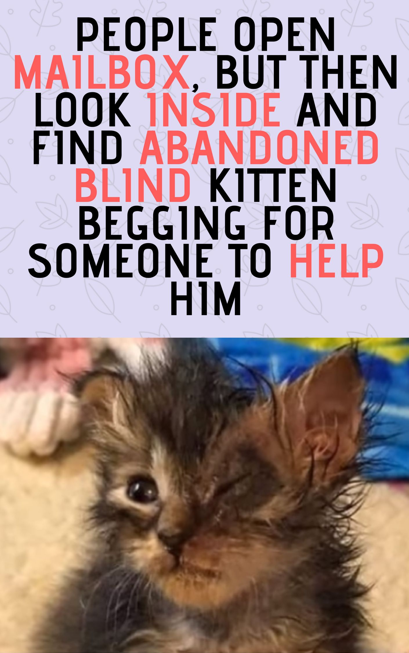 People Open Mailbox But Then Look Inside And Find Abandoned Blind Kitten Begging For Someone To Help Him Cats And Kittens Stories Why Do Cats Purr Cat Rescue Stories Kitten