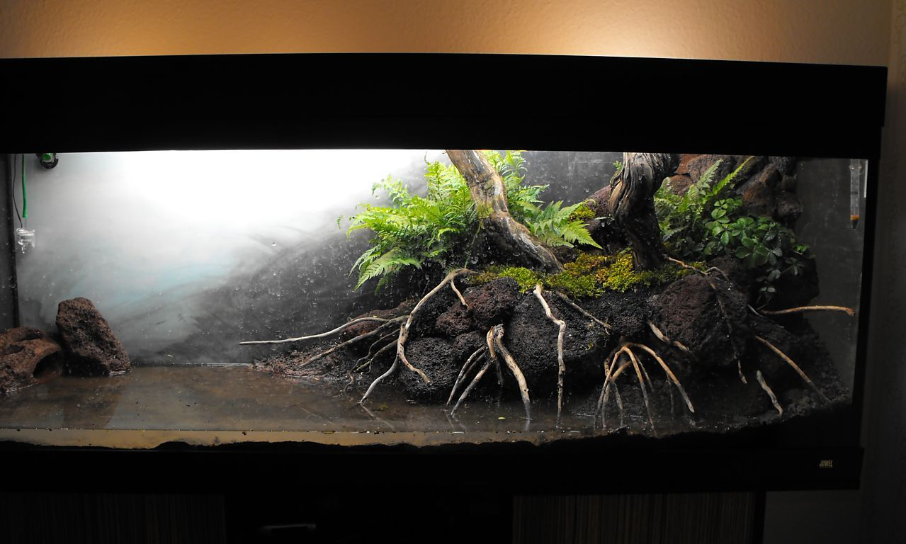 pin von sean palmer auf reptiles vivariums pinterest aquarium deko aquarium und asien. Black Bedroom Furniture Sets. Home Design Ideas