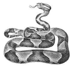 copperhead drawing google search