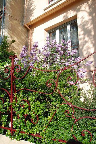 Lilacs on gate, Antony