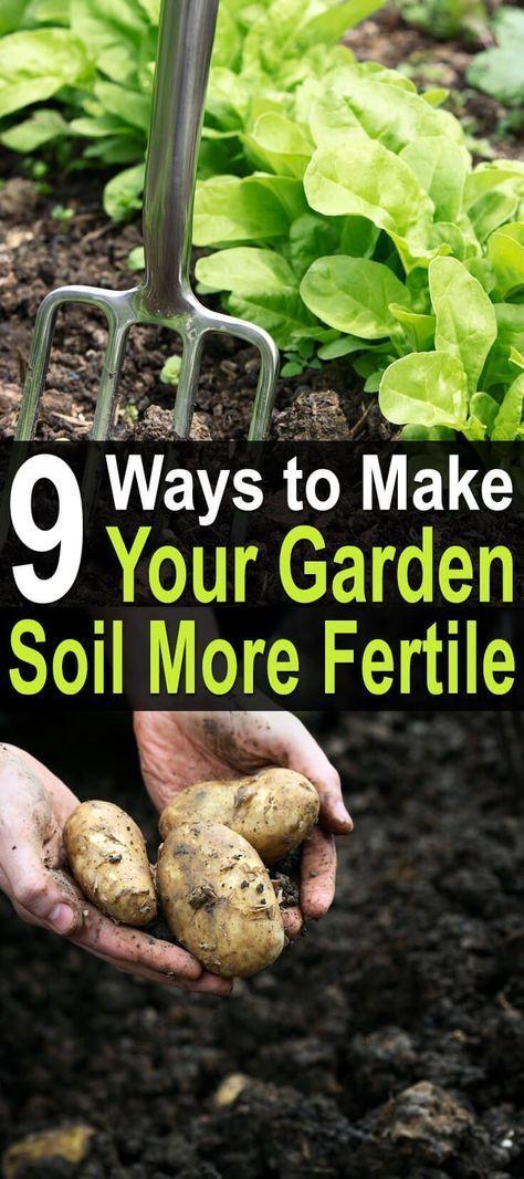 9 Ways to Make Your Garden Soil More Fertile   Garden soil, Plants ...