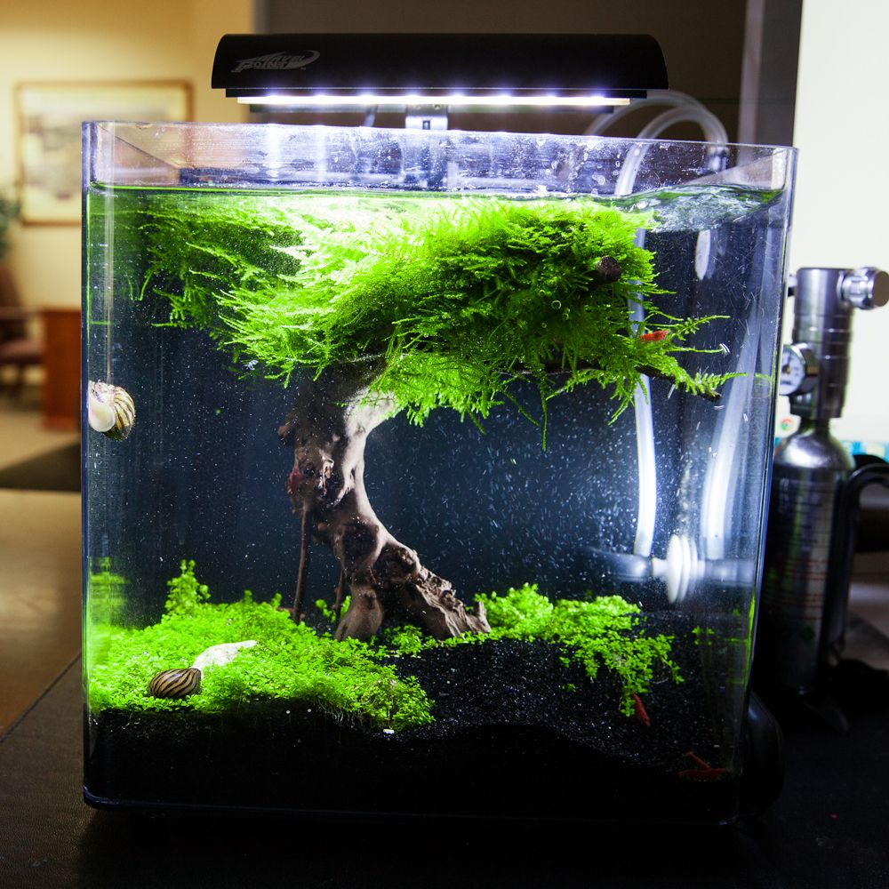 Aquascape nano recherche google aquascape pinterest for Aquarium boule 20 litres