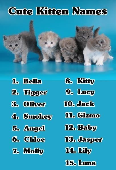 Cute kitten names Kittens cutest, Kitten pictures