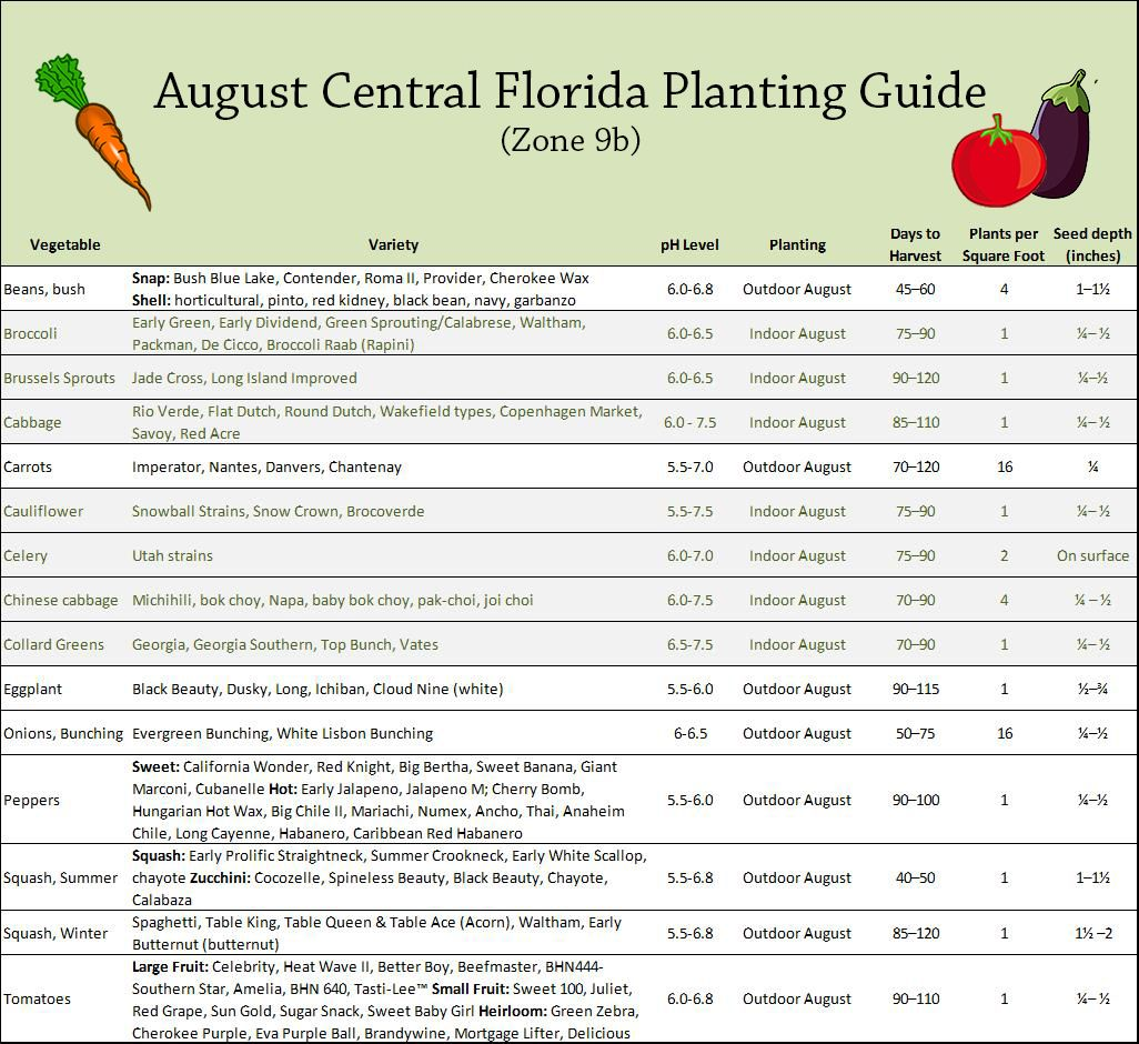 What To Plant In August In Central Florida Vegetable 640 x 480