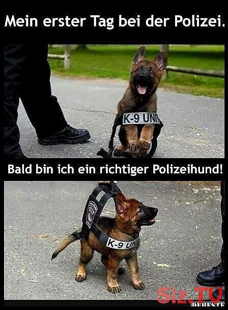 Mein erster Tag bei der Polizei  Lustige Bilder Sprüche Witze echt lustig Mein erster Tag bei der Polizei  Lustige Bilder Sprüche Witze echt lustig