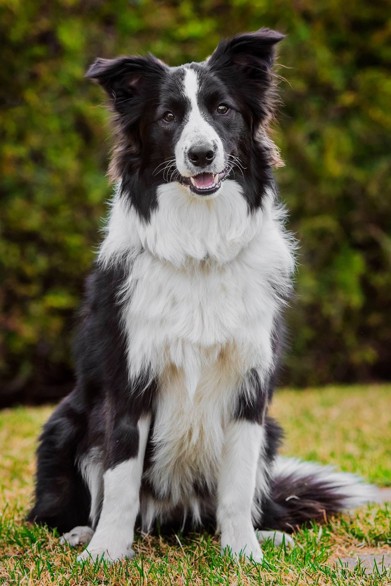 Pin By Halle Nagle On Border Collies Dogs Border Collie Collie