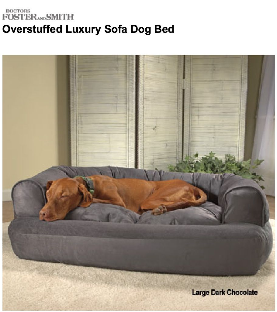 ✅ Overstuffed Luxury Sofa Dog Bed --Dr. Foster and Smith ...