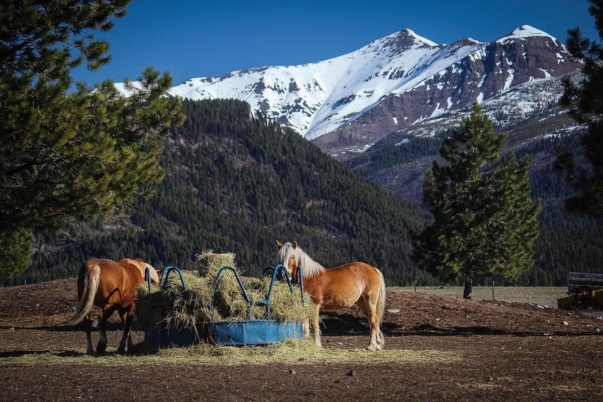 Montana Ranches for Sale in 2019   Montana Ranches For Sale
