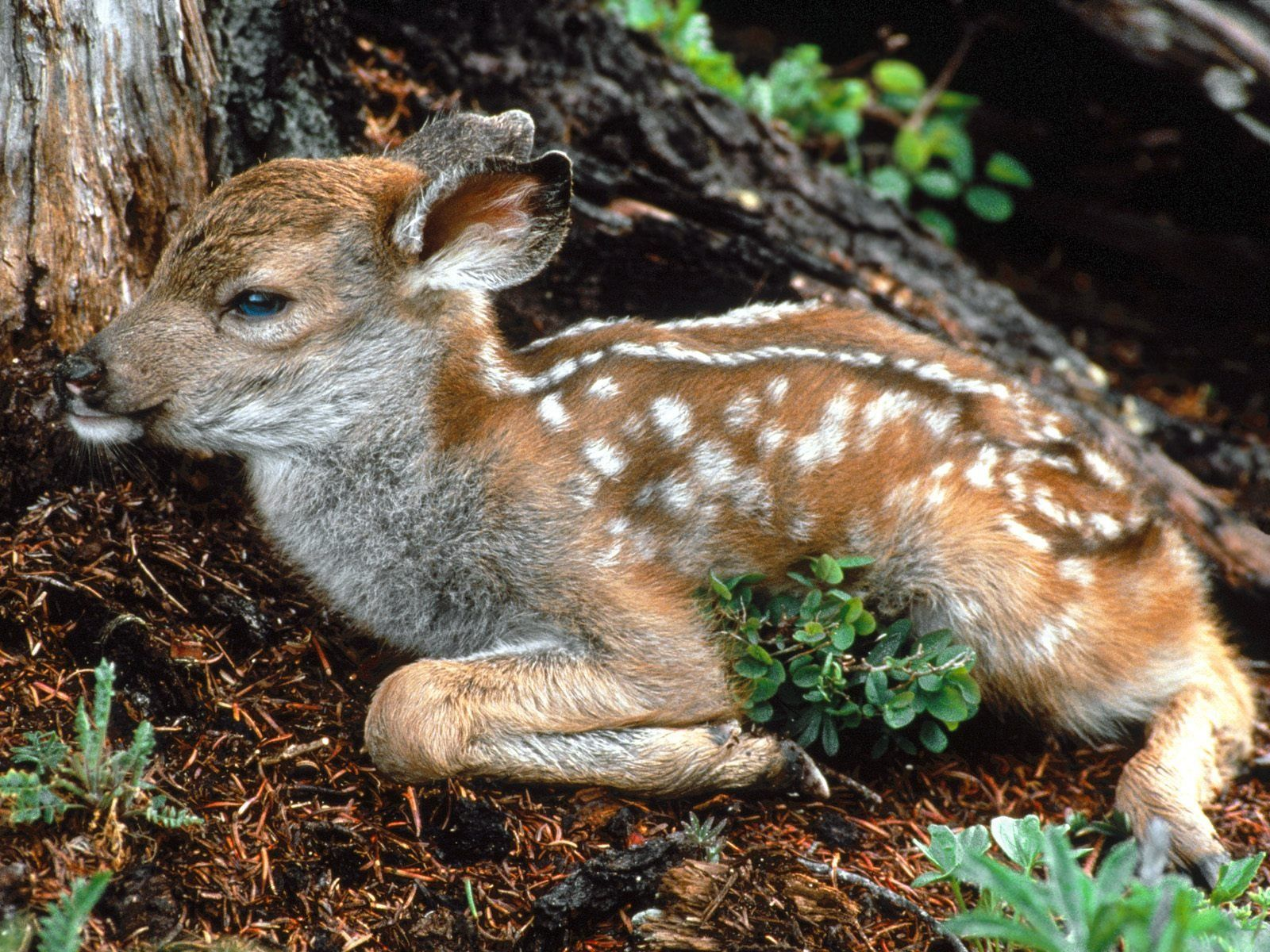 Cute Baby Animal Wallpapers Wallpaper