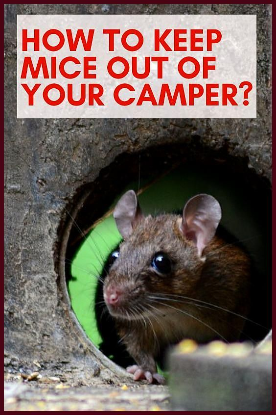 How to Keep Mice Out of Your Camper Camper Smarts RV parks camper trailers campervan interior campe