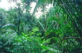 Tämäkin sademetsä kasvaa tuotteemme ansiosta. Ostamalla tuotetta parannat sademetsien elämää, sekä olet osana pelastamassa maailmaa!