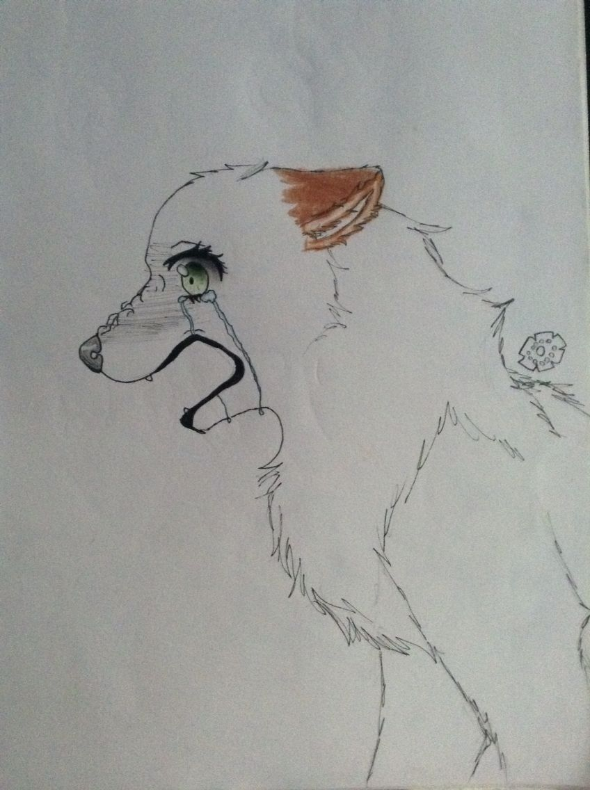 my drawing of a wolf crying and her name is rachel anime