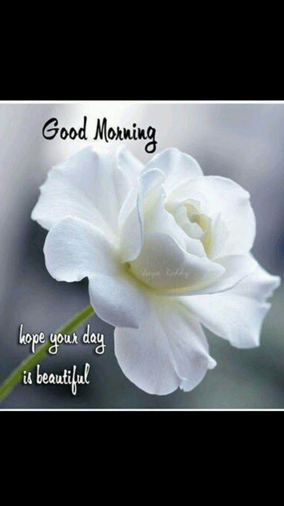 Pin by aran prasad on good night and good morning pinterest discover ideas about good morning greetings izmirmasajfo