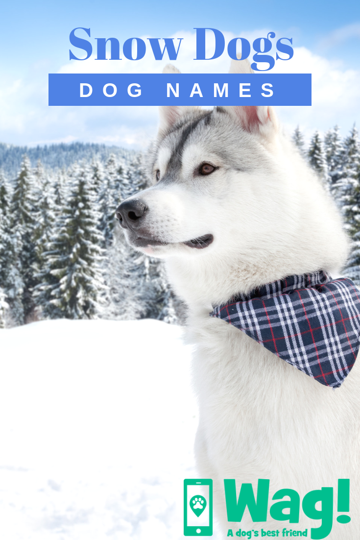 Snow Dogs Inspired Dog Names Wag Dog Names Best Dog Names Snow Dogs