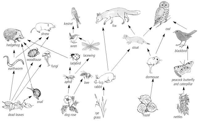 Food Web Coloring Pages Collection