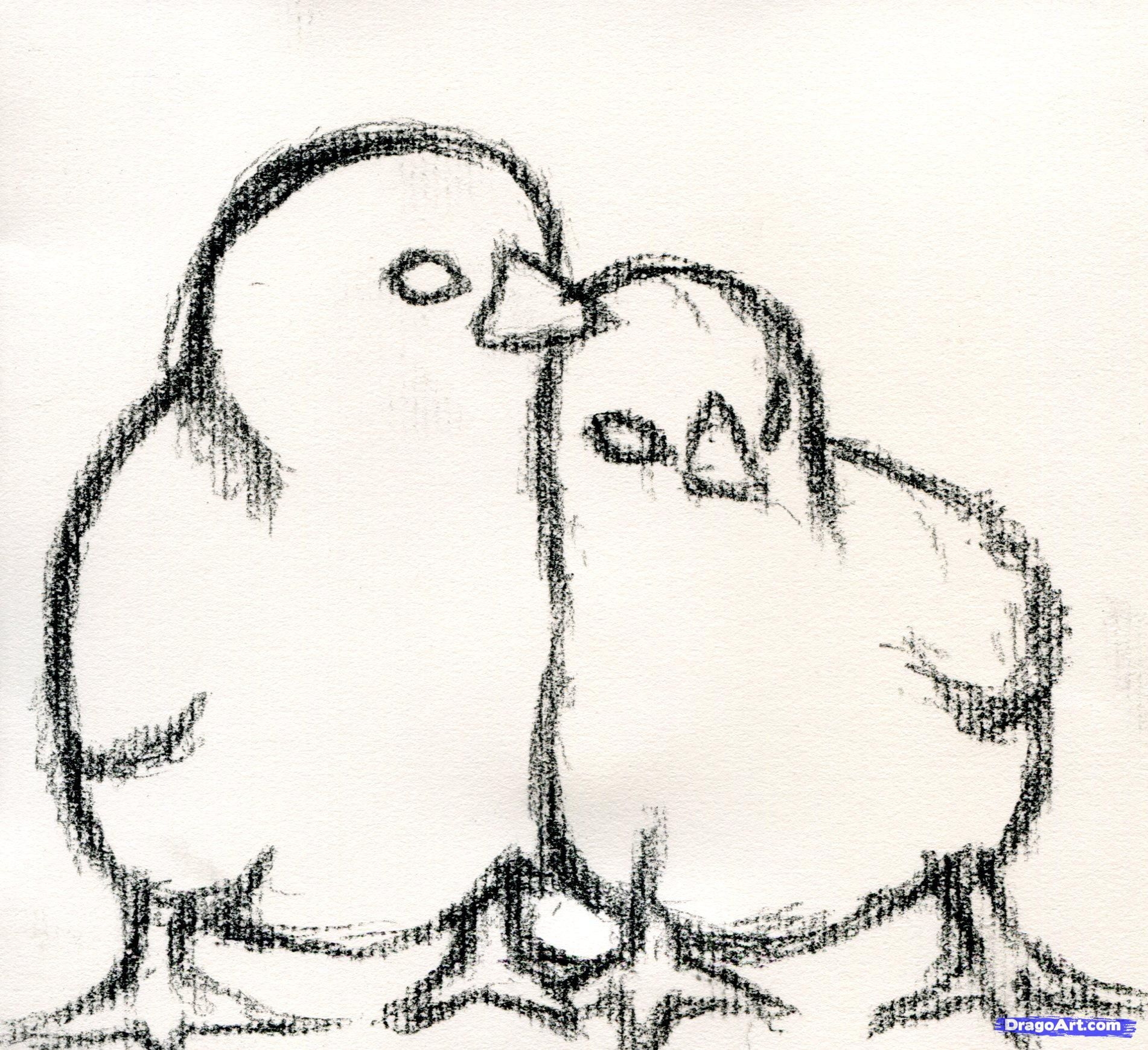 how to draw baby chickens realistic chicks step 3 tutorials