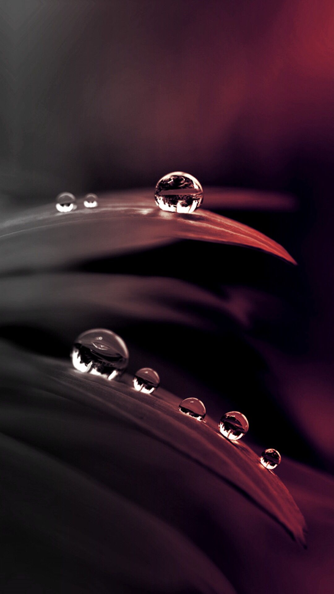 Water Leaf Wallpaper Water Drop Photography Water Photography