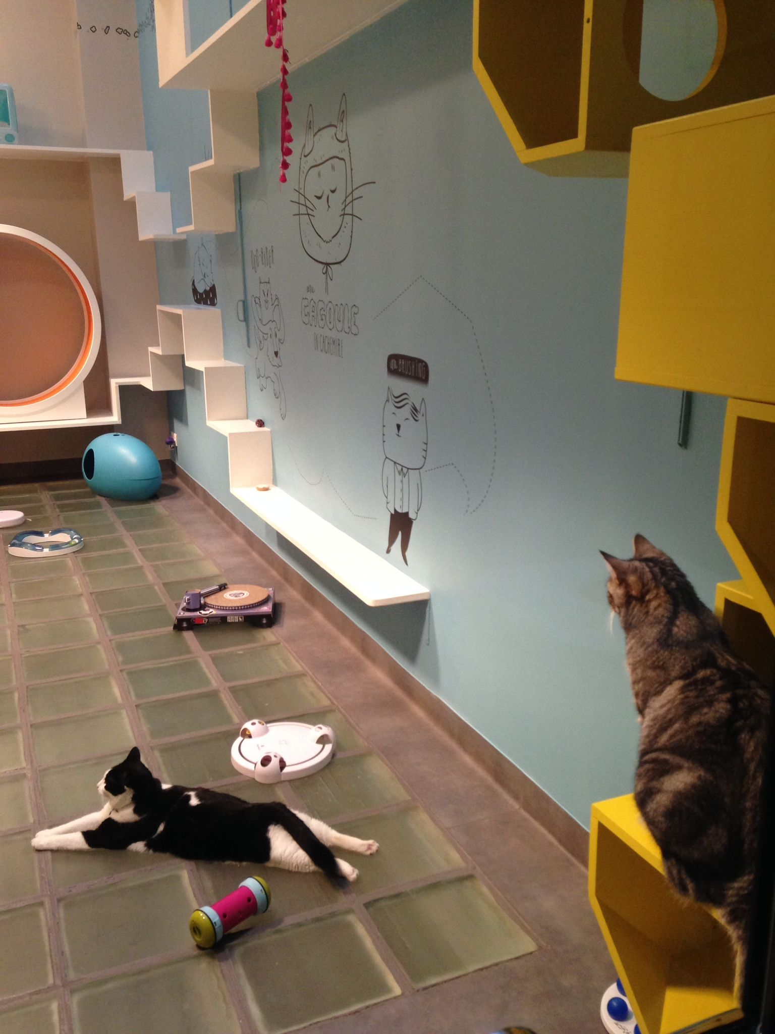 Cat Yoga In The Playroom Of Aristide Cat Hotel Hotel Para Gatos