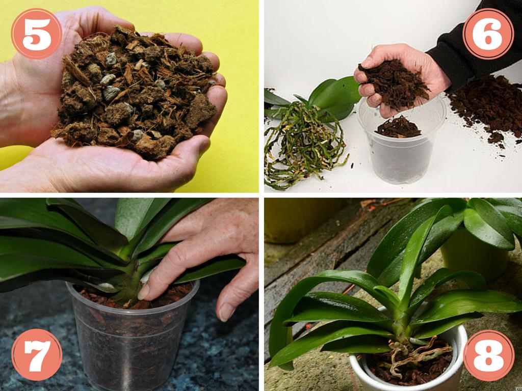 rempoter orchidée | Entretien des fleurs & plantes | Pinterest ...