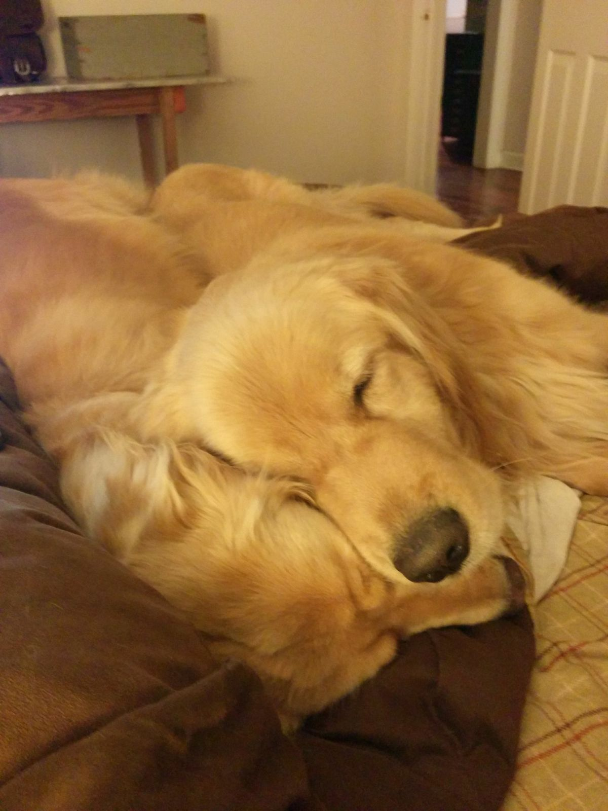 I Rescued A Golden Retriever This Past Summer Who Was Just Hanging