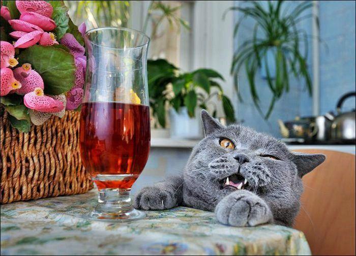 Котики и вино картинки