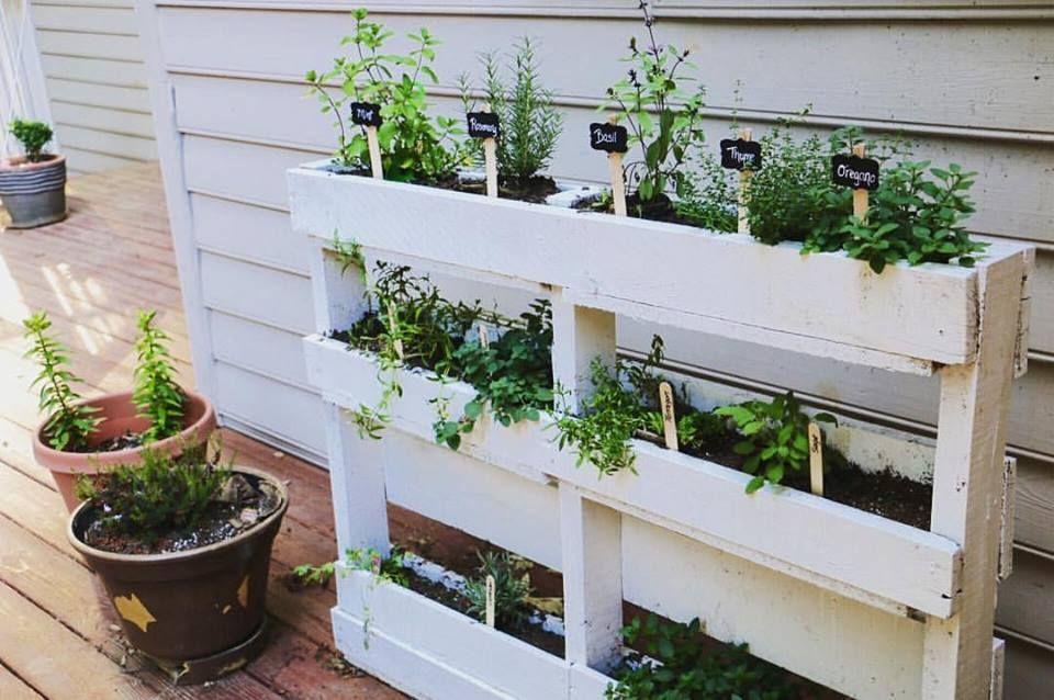 Wood Pallet Herb Garden Therapeutic Miles Herb Garden Pallet
