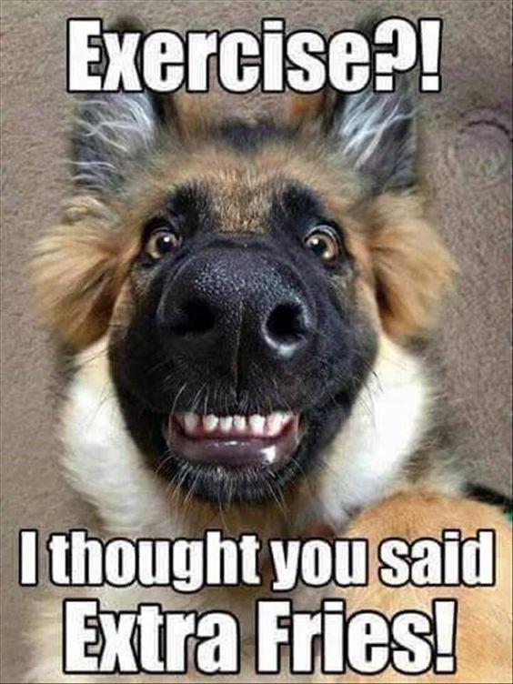 25 Goofy Memes Of German Shepherds That Will Make