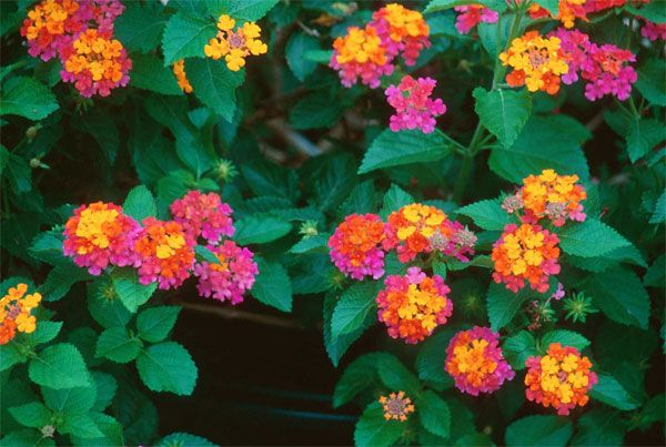 Backyard Landscaping Hanging Flower Baskets Most Beautiful Flowers Backyard Plants