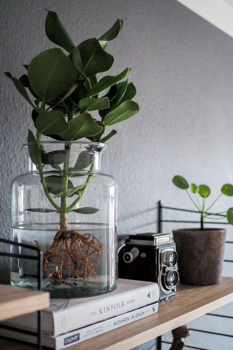Water Plants, der neue Pflanzentrend Balkon  Pflanzen Pinterest - Pflanzen Deko Wohnzimmer