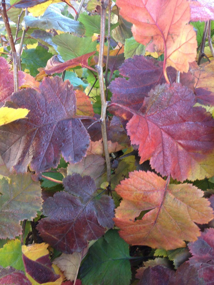autumn photoshop