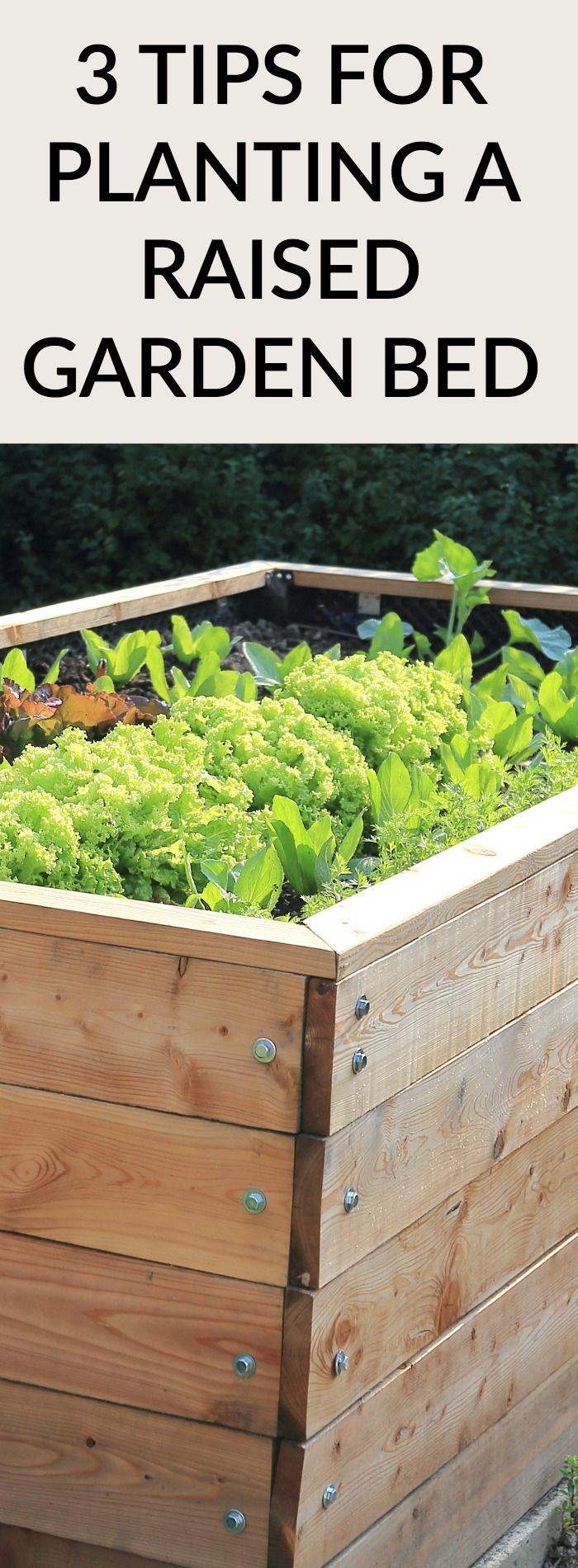 3 TIPS FOR PLANTING IN A RAISED GARDEN BED Raised garden