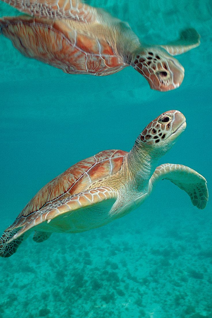I'd love to go scuba diving to see sea turtles in the Caribbean.