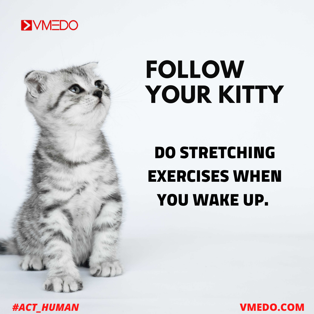 Follow Your Kitty In 2020 Better Healthcare Emergency Medical Health Insurance Quote