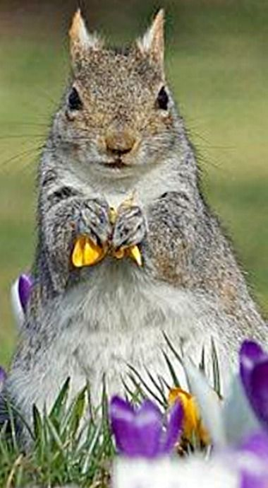 Pin By Sue B On Feelin Squirrely Cute Squirrel Squirrel Cute Little Animals