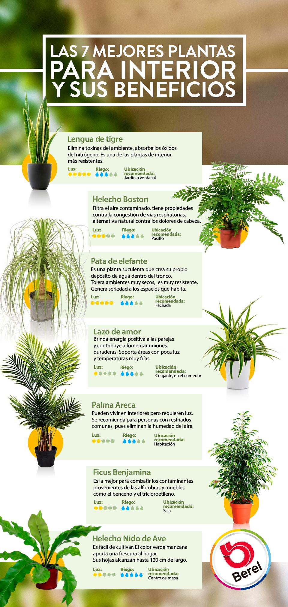 Plantas De Ornato Para Interiores