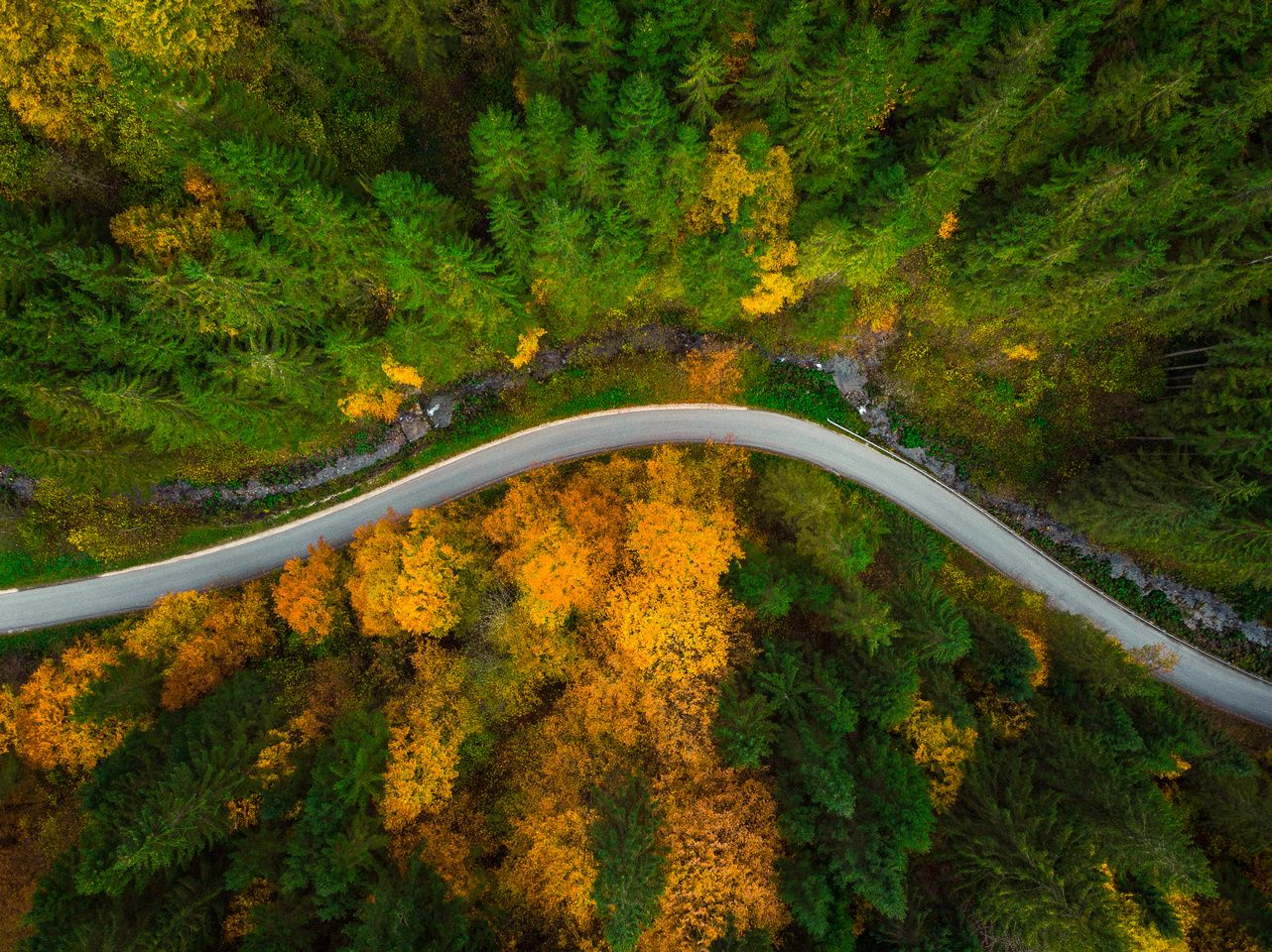 Autumnal Forest Top Down Drone View Drone View Drone Photography Drone