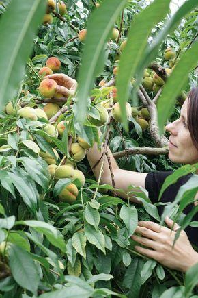 Auf meinem Gartenblog bekommst Du Tipps zur Gartenbewässerung, zum