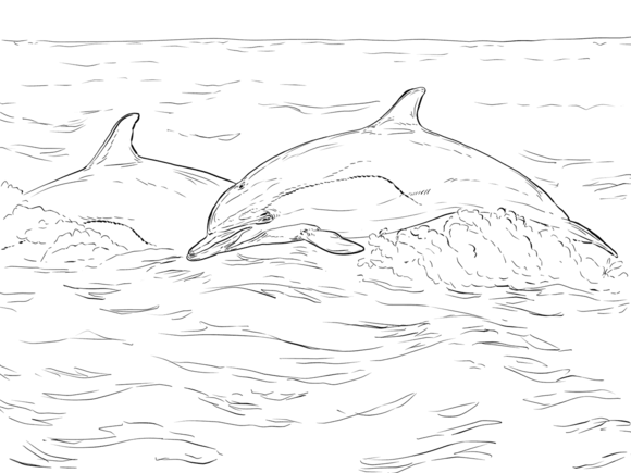 Short Beaked Common Dolphin Coloring Page Free Printable Coloring Pages Dolphin Coloring Pages Farm Animal Coloring Pages Animal Coloring Pages