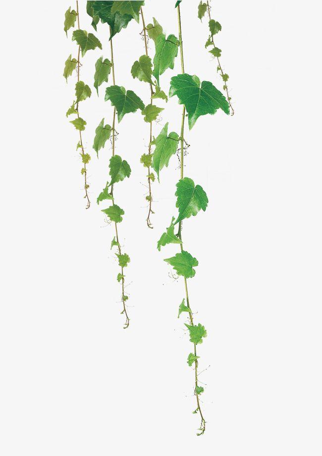 Green Leaf Vine Ilustrasi Daun Hijau Pemandangan Abstrak