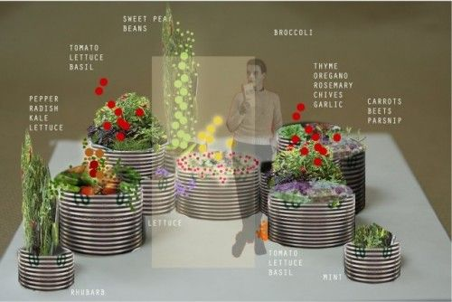 Layout for raised beds