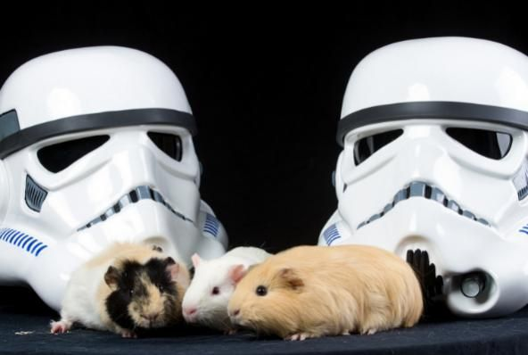 Animals From Humane Society Cuddle With Star Wars Characters