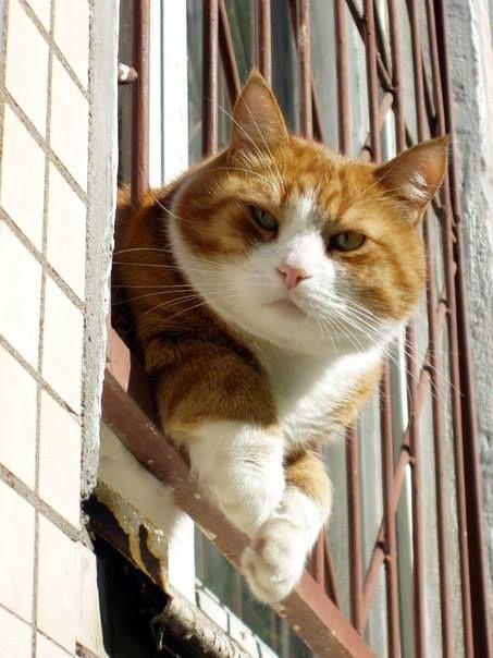 Обои кошка, глаза, кот, взгляд, морда, котенок, мордочка картинки ... | 604x453