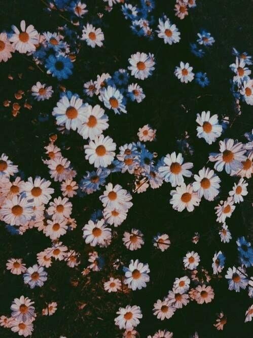 Margherita Fiore Tumblr Cerca Con Google красивые картинки