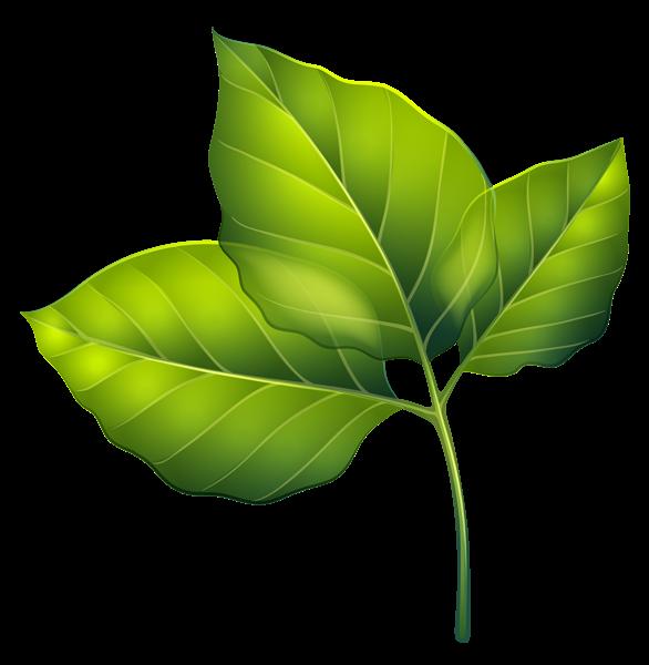 Three Green Leaves Png Clipart Image Digital Flowers Clip Art Leaf Art