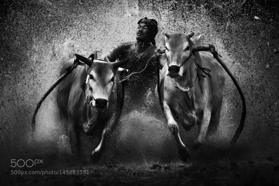 In the mud... by memensaputra19