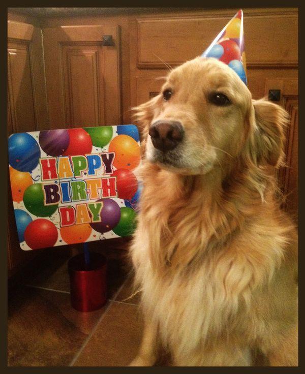 Happy Birthday Dog Golden Retriever Birthday Golden Retriever
