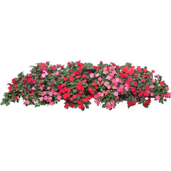 Flower Bed Liked On Polyvore Featuring Flowers Garden Fillers Landscape Nature Backgrounds And Scenery Flower Beds Trees To Plant Tree Photoshop