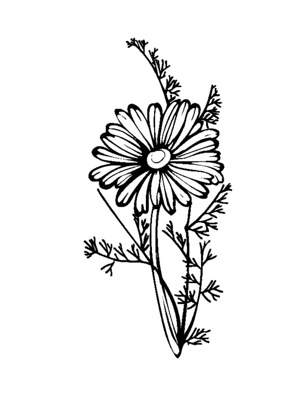 Pin On Aster Flower Coloring Pages