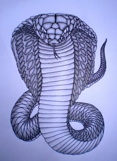 Cobra royal spirit animal pinterest patios animal - Dessin de serpent cobra ...